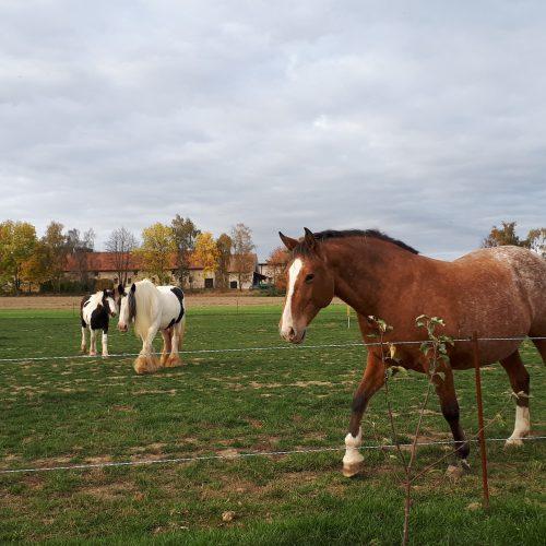 krásní koně