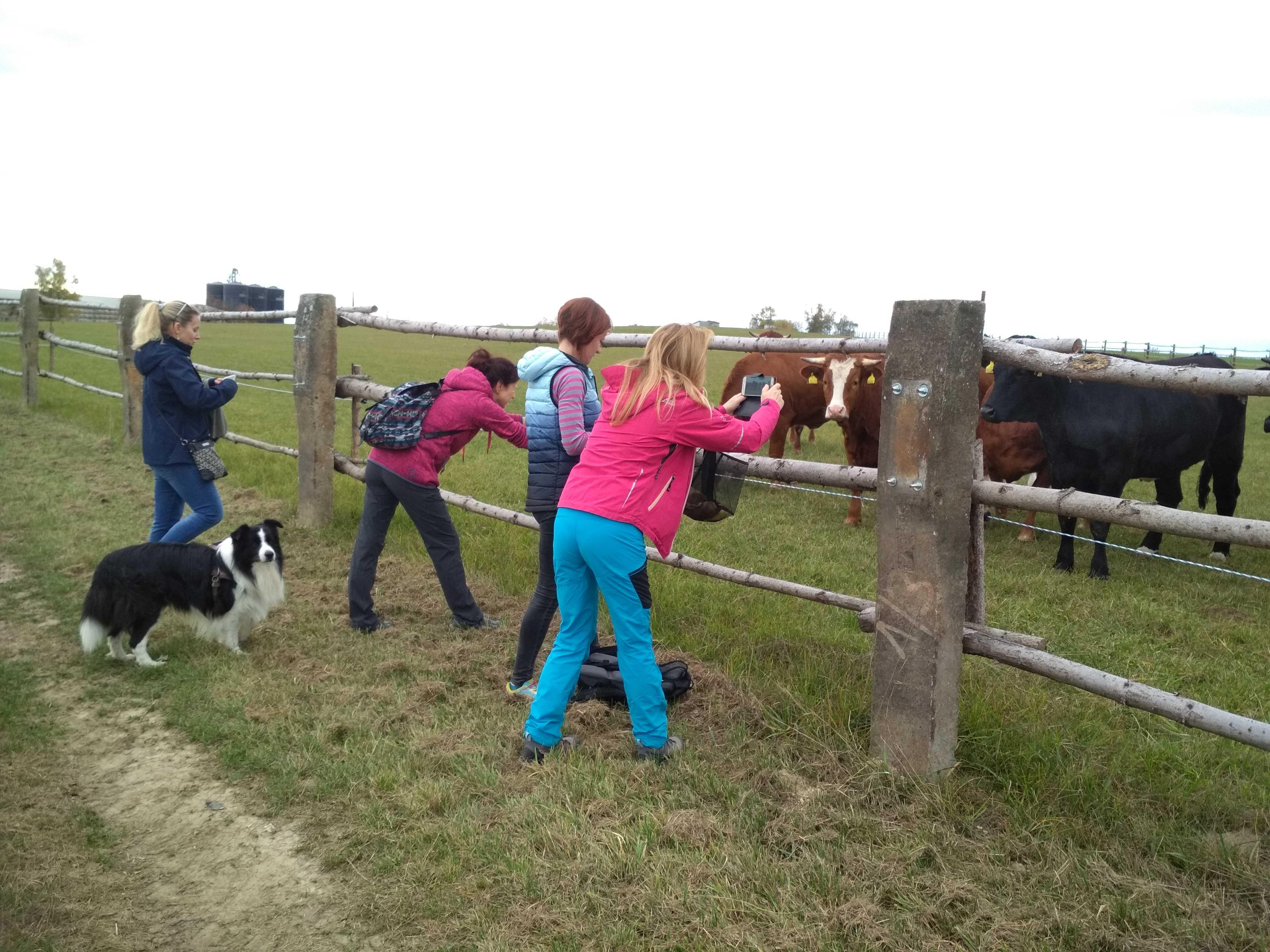 cestou si fotíme krávy :)