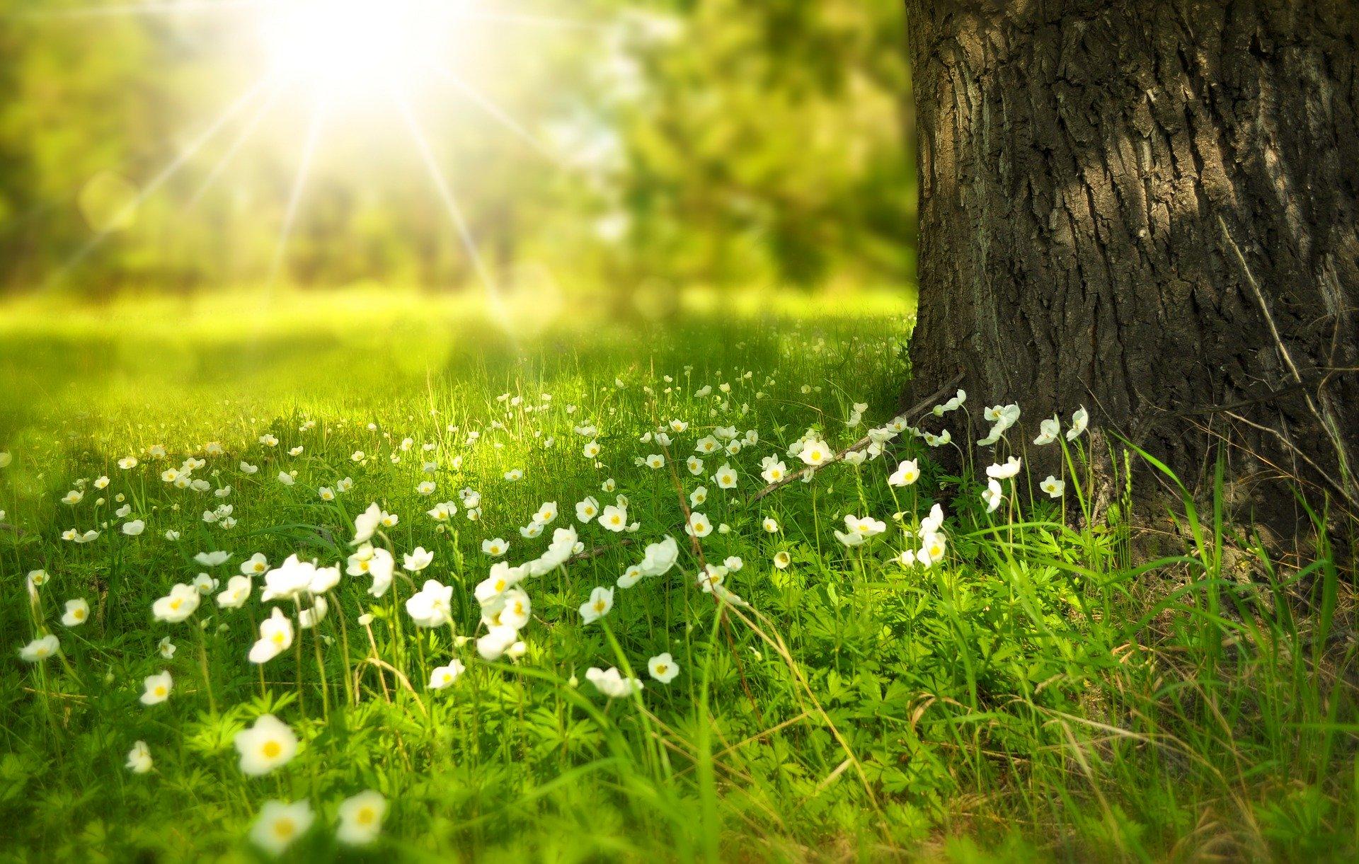 relaxace - příroda